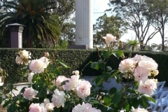 October Rose Garden Picnic Point Toowoomba